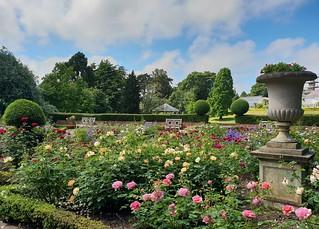 The Rose Garden at Birmingham Botanical Gardens.