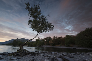 Lone Tree of Llyn Padarn