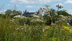 Nearing Loevestein Castle (joeke pieters) Tags: 1410324 panasonicdmcfz150 vestingdriehoek gelderland nederland netherlands holland bloemen wildflower slotloevestein kasteel castle landschap landscape landschaft paysage