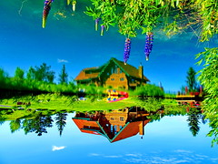 Welcome to my Topsy-turvy World (peggyhr) Tags: peggyhr topsyturvy lake loghouse boats trees dock flowers reflections flipped dsc04772c bluebirdestates aberta canada lupins lupine super~sixbronze☆stage1☆ level1pfr frameit~level01~ thelooklevel1red infinitexposurel1 visionaryartsgallerylevel1 addictedtoreflections groupecharlie01 dslrautofocuslevel1 thelooklevel2yellow photofeelings photographicexcellence thelooklevel3orange super~six☆stage2☆silver thegalaxy thegalaxystars 50faves super~six☆stage3☆gold thegalaxylevel2 halloffamegallery thelooklevel4purple