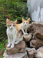 Cats @ Stara Fuzina (morbidtibor) Tags: cat kat kater poes kitten pussycat slovenia starafuzina