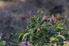 Foco Diferenciado_05 (LeoPeci-Foto) Tags: cfq focodiferenciado puertomadero flores
