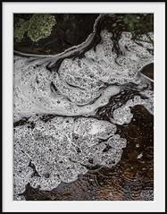 foam, rain and tannin (Andrew C Wallace) Tags: tannin foam rain creek forest wonderland grandcanyon grampiansnationalpark victoria australia waterflow thephotontrap olympusomdem5 olympus microfourthirds m43 nature