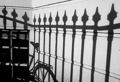 Brighton yn yr haul / Brighton in the sun (Rhisiart Hincks) Tags: pattern patrwm rheilin railings bike cycle blancinegre duagwyn gwennhadu dubhagusgeal dubhagusbán blackandwhite bw zuribeltz blancetnoir blackwhite monochrome unlliw blancoynegro zwartwit sortoghvid μαύροκαιάσπρο feketeésfehér juodairbalta beic bicycle marc'hhouarn velo baidhsagal rothar fahrrad bicylette bizikleta divrodeg diwros deurod cysgodion itzalak skeudoù shadows ombres dubharan scáthanna brighton sussex feansa feans ffens argaeenn fence claí fál sconsa