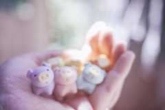 178/365 : Blurry Bokeh (♥GreenTea♥) Tags: pig eraser pigeraser pigs erasers pigerasers bluepig pinkpig purplepig greenpig orangepig yellowpig blue pink purple green orange yellow iwako iwakoeraser iwakoerasers イワコー blurry bokeh hand t1i canon canont1i canont1irebel canonrebel eos canoneosrebelt1i ef40mmf28stm canonef40mmf28stm098ft03mpancakelens canonef40mm canonef pancakelens googlenikcollection nikcollection colorefexpro viveza 365 photoaday pictureaday project365 365toyproject oneobject oneobject365daysproject 365the2018edition 3652018 day179365 365day179 day179 project365179 28june18 project36506282018 06282018 odc ourdailychallenge smallanimals odcsmallanimals ourdailychallengesmallanimals