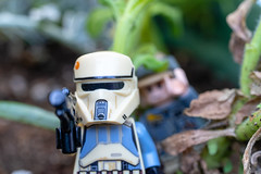 187:365 - Hiding (LostOne1000) Tags: day187365 cy365 plants nature toys things legos 3652018 365the2018edition macro starwars entertainment photography 365challenge technicalphotography movies rebels 060718 stormtroopers july marion iowa unitedstates us