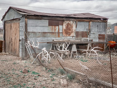 racks (bugeyed_G) Tags: route66 seligman arizona southwest antlers rural desert shed decay rurex