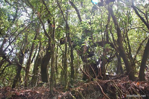 Національний парк Гарахонай, Гомера, Канарські острови  InterNetri  0704