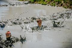 (c)Fotograaf Mike Rikken-Tot de nek in de drek Vriezenveen - Mudrace-217