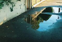 (nikki.lake) Tags: newtopographics reflection tree puddle film analogue analog olympus olympusom2n expiredfilm agfa agfaultra100 35mm