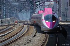 JR West - Hello Kitty Shinkansen - 3 (HAMA-ANNEX) Tags: hdpentaxdfa150450mmf4556eddcaw k1ii jr西日本 jrwest shinkansen hellokittyshinkansen hellokitty ハローキティ新幹線 ハローキティ 500series 500 500系