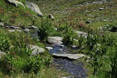combe des Planards (bulbocode909) Tags: valais suisse bourgstpierre valdentremont combedesplanards sentiers montagnes nature rochers eau ruisseaux fleurs vert gentianes rhododendrons