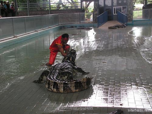 В пащу крокодилу Паттайя Таїланд Thailand InterNetri 15