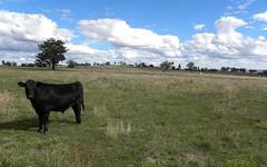 85, CAMP ROAD, Cowra NSW