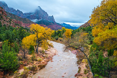 Winter Snow Zion National Park! Brilliant Autumn Colors Zion National Park Fall Foliage Fine Art Landscape Photography! Burning Cottonwood Tree Leaves East Side!  Sony A7R2 Carl Zeiss Sony Vario-Tessar T* FE 16-35mm f/4 ZA OSS Lens SEL1635Z E mount Lens! (45SURF Hero's Odyssey Mythology Landscapes & Godde) Tags: winter snow zion national park brilliant autumn colors fall foliage fine art landscape photography burning cottonwood tree leaves east side sony a7r2 carl zeiss variotessar t fe 1635mm f4 za oss lens sel1635z e mount elliot mcgucken nature