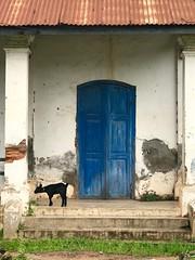 Black Goat, Blue Door