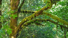 A Mossy Sunday Morning (PDX Bailey) Tags: moss green calm peaceful quiet morning walk rural washington state east vancouver northwest pacific pnw