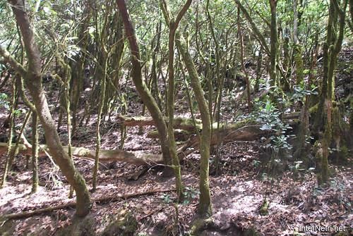 Національний парк Гарахонай, Гомера, Канарські острови  InterNetri  0720