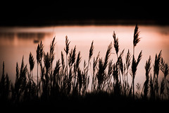 Camargue Softness (NathalieSt) Tags: camargue europe france gard languedocroussillon leverdesoleil nikon nikond5500 nikonpassion nikonphotography sunrise
