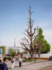 Real tree - Skytree (AMcUK) Tags: em10 omdem10 omdem10mkii em10mkii omd olympus olympusuk m43 micro43rds micro43 microfourthirds japan nippon tokyo taitōku tōkyōto jp ueno tree skytree