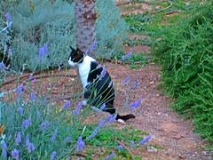 Summer cat (Susannaphotographer) Tags: cat cats catslife animals cute gardencat gatto animal pets katti
