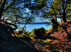 From inside the hidden path (elphweb) Tags: hdr highdynamicrange nsw australia seaside sea ocean water forest bush tree trees wood woods