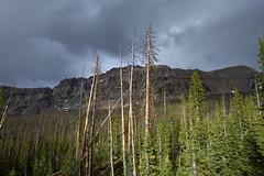 Shining Moment (JasonCameron) Tags: storm weather cloud sky rain sun break shine tree pine mountain hayden peak
