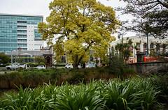 Many Shades of Green (Jocey K) Tags: newzealand nikond750 christchurch cbd building architecture trees cars bridge plants avonriver sky