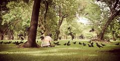 Man and the crows. (juliajjphotography) Tags: bangkok bird crow feed feeding green lumphini lumpini man park thailand life love happy trip world horizon people embrace dream moody ambient art artistic live smile traveler dreaming