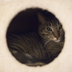 (getsomejelly) Tags: brown tabby cat hole bokeh shallow depth field 11 square crop