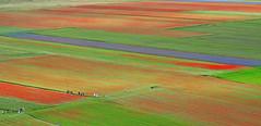 Persone in arte astratta naturale - People in natural abstract art (Ola55) Tags: ola55 italy umbria castellucciodinorcia piangrande fioritura flowers fiori blossom poppies papaveri fiordalisi cornflowers