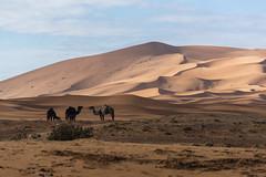 Tea in the sahara (alfienero) Tags: desert morocco sahara camel dunes shadow vivid landscape travel