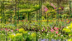201804200727 (Leow Sama) Tags: claude monet deau watergarden giverny jardin fleurs