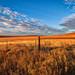 U.S. Route 50 Tallgrass Morning