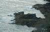 IMGP3733 (mattbuck4950) Tags: england unitedkingdom europe water holidays englishchannel birds lenssigma18250mm photosbymatt may cornwall camerapentaxk50 cormorants 2018 falmouth holiday2018cornwall gbr