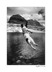 Exuberance_8291 (The Terry Eve Archive) Tags: fionnloch suilven mountains dog jumping splash wet water drops drips play fun spaniel springerspaniel floppyears