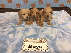 Roxie Boys pic 2 6-17