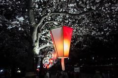 _DSC8094 (ilaria_gori) Tags: japan tokyo cherryblossom lantern