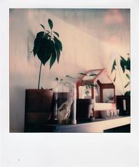 instant film (La fille renne) Tags: film instantfilm polaroid polaroidsx70alpha sx70 polaroidoriginals color home