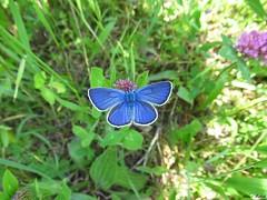 Butterfly 1701 (+1300000 views!) Tags: butterfly borboleta farfalla mariposa papillon schmetterling فراشة