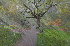 Reynolds Square (LarryHB) Tags: hdr horizontal photography texture historic old park georgia savannah tree digitalart bench liveoak nrhp