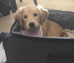 Sophia's adorable girl Tanner!