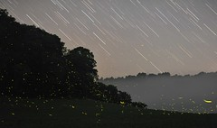 Stars and Fireflies (Kirby Wright) Tags: fire flies fireflies long exposure soybean field night sky stars trails trees horizon dark middle nowhere countryside woods summer july humid fog foggy clear nikon d700 85mm f14 manfrotto tripod lights green bugs insect hill hillside iowa county wisconsin boonies farm