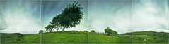 Side by Side on Fairlie Moor (wheehamx) Tags: curve film pinhole pano panoramam fairlie moor wide angle
