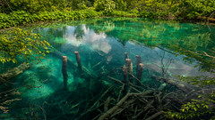 underwater world (hjuengst) Tags: plitvicerseen plitvickajezera kroatien croatia water wasser see lake nationalpark green turquoise türkis grün reflection reflektionen spiegelung