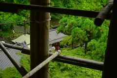 DSC_0036 (sxcxxhx) Tags: japan osaka kyoto hydrangea flower trip voyage 日本 大阪 京都 旅行