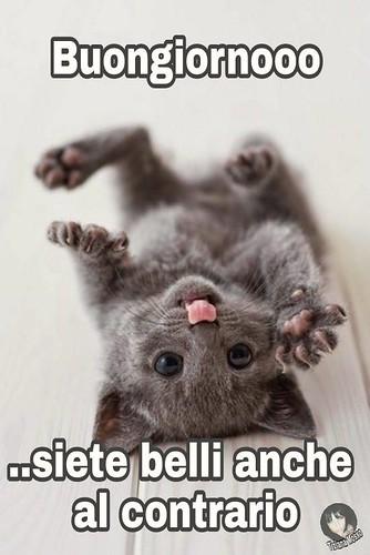 Link Divertenti Buongiorno Kitten Cat Buona Giornata Page
