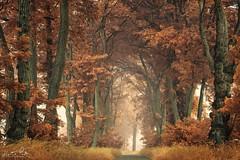 Forêt nature6 (CISSÉO) Tags: forêt arbres nature bois