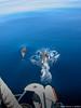 Dolphins on Passage (David J. Greer) Tags: mediterranean sea water passage sail sailing sailboat family travel menorca spain corsica france outside outdoor outdoors dolphin dolphins pod boat