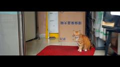 喵店長 shop keeper cat (Steve only) Tags: epson rd1 leica leitz canada summilux 11435 35mm f14 3514 rangefinder rf snap cats 35lux